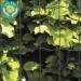 Puutarha-aita Hortus, 5x10cm, 1.2x25m, 0% PVC, musta kuva1