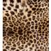 Kuvatapetti Dimex Leopard Skin, 225x250cm kuva0