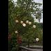 LED-valoketju Star Trading BigCircus, IP44, 450cm kuva2