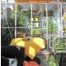 SUN-Kasvihuone Herkules Hastings, 6,3m², lasilla, seinustamalli-4