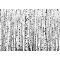 Kuvatapetti Artgeist Birch forest, 350x245cm, Verkkokaupan poistotuote