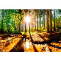Kuvatapetti Artgeist Marvelous Forest, eri kokoja