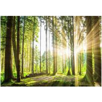 Kuvatapetti Artgeist Forest Tales, eri kokoja