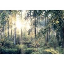 Sisustustarra Artgeist Tales of a Forest, eri kokoja