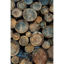 Paneelitapetti PhotowallXL Wood Logs 158206, 1860x2790mm, ruskea