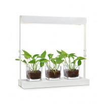 Kasvivalaisin Markslöjd Harvest, LED, 50x18x50 cm, valkoinen