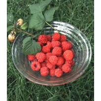 Vadelma Rubus idaeus Viheraarni Maurin Makea