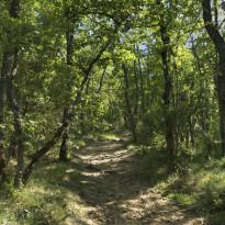 Seinätarra Metsässä, 240x240cm