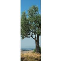 Jääkaappitarra Oliivipuu 59,5x180 cm