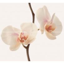 Kuviolaatta Pukkila Pasadena Orquidea, kiiltävä, sileä, 547x500mm