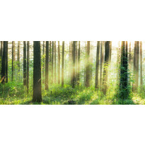 Valokuvatapetti Idealdecor, Sunset in the Woods 8-osaa, 00964 366x254 cm, non-woven