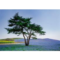 Valokuvatapetti Idealdecor Digital Tree In Blue Flower Field In Japan 4-osaa, 5034-4V-1, 254x368cm
