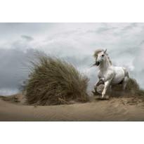 Valokuvatapetti Idealdecor Digital White Wild Horse 4-osaa, 5086-4V-1, 254x368cm