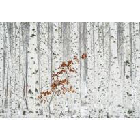 Valokuvatapetti Idealdecor Digital White Birch Forest 4-osaa, 5104-4V-1, 254x368cm