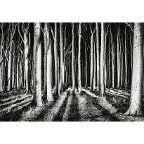 Valokuvatapetti Idealdecor Digital Ghost Forest 4-osaa, 5106-4V-1, 254x368cm
