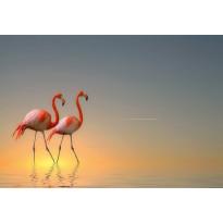 Valokuvatapetti Idealdecor Digital Flamingos 4-osaa, 5141-4V-1, 254x368cm
