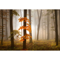 Valokuvatapetti Idealdecor Digital Foggy Autumn Forrest 4-osaa, 5153-4V-1, 254x368cm