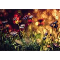 Valokuvatapetti Idealdecor Digital Flowers And Lights 4-osaa, 5156-4V-1, 254x368cm
