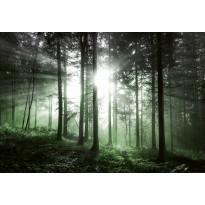 Valokuvatapetti Idealdecor Digital Sun Rays 4-osaa, 5181-4V-1, 254x368cm