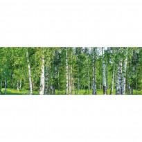 Välitilatarra Dimex Birch Grow, 180-350x60cm