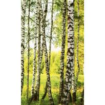 Kuvatapetti Dimex Birch Forest, 150x250cm
