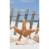 Kuvatapetti Dimex Starfish, 150x250cm