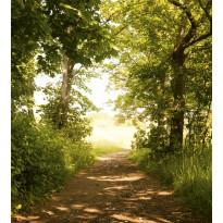 Kuvatapetti Dimex Forest Path, 225x250cm