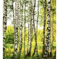 Kuvatapetti Dimex Birch Forest, 225x250cm