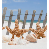 Kuvatapetti Dimex Starfish, 225x250cm