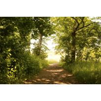 Kuvatapetti Dimex Forest Path, 375x250cm