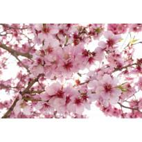 Kuvatapetti Dimex Apple Blossom, 375x250cm