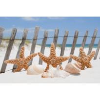 Kuvatapetti Dimex Starfish, 375x250cm