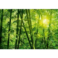 Valokuvatapetti 00123 Bamboo Forest 8-osainen 366x254cm
