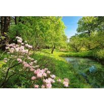 Valokuvatapetti 00136 Park in the Spring 8-osainen 366x254 cm