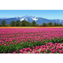 Valokuvatapetti 00137 Tulips 8-osainen 366x254 cm