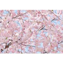 Valokuvatapetti 00155 Pink Blossoms 8-osainen 366x254 cm