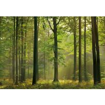 Valokuvatapetti 00216 Autumn Forest 8-osainen 366x254cm