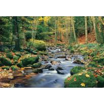 Valokuvatapetti 00278 Forest Stream 8-osainen 366x254cm