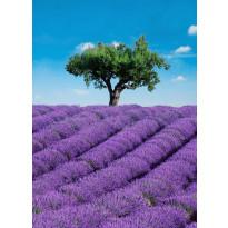 Valokuvatapetti 00309 Provence 4-osainen 183x254 cm