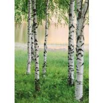 Valokuvatapetti 00381 Nordic Forest 4-osainen 183x254 cm