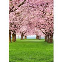Valokuvatapetti 00385 Cherry Trees 4-osainen 183x254 cm