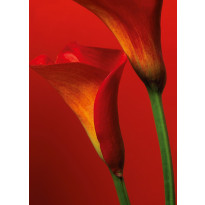Valokuvatapetti 00406 Red Calla Lilies 4-osainen 183x254cm