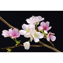 Juliste Giant Art 00627 Cherry Blossoms 175x115 cm
