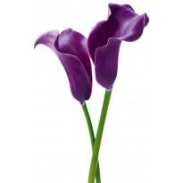 Juliste Giant Art 00675 Purple Calla Lilies 115x175cm