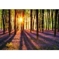 Valokuvatapetti 00952 Woodland at Dawn 8-osainen non-woven 366x254cm