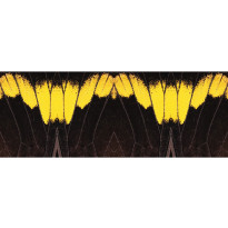 Valokuvatapetti Quattro Butterwings 8-osainen 372x280cm