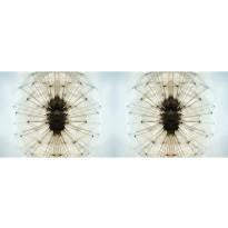 Valokuvatapetti Quattro Dandelion 8-osainen 372x280cm