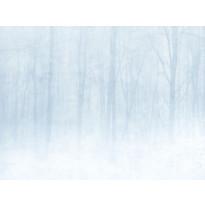 Vinterskog 622-18