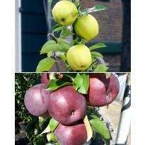 Pilariomenapuu Viheraarni mix, 2 kpl/pak